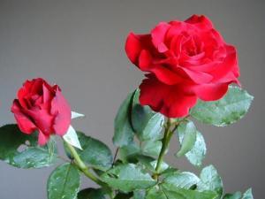natural_red_beauties